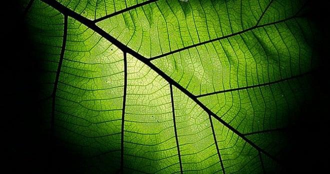 为什么说人类离不开植物的光合作用?