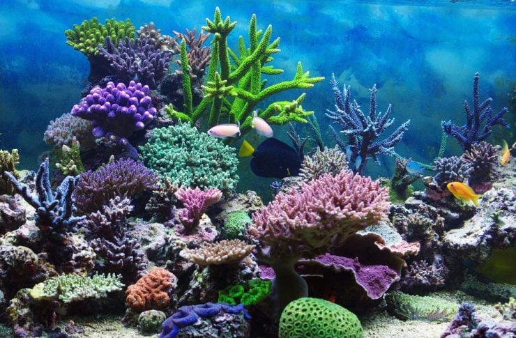 珊瑚为什么这样美?