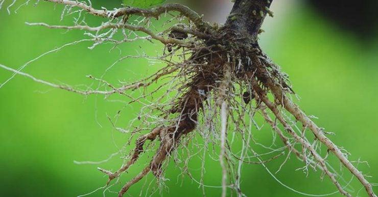 为什么植物要长很长的根?