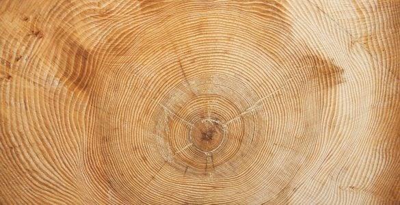 为什么树木年轮线的间距大小不等?