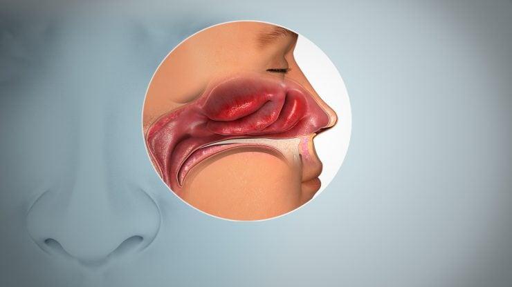 为什么鼻子能闻出各种气味?