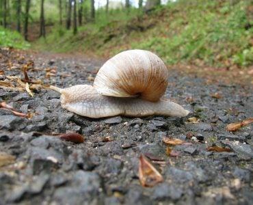 """为什么蜗牛爬行时会留下""""足迹""""?"""