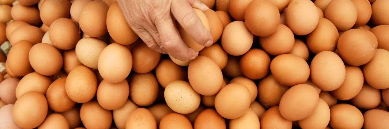 为什么鸡蛋不能吃太多?