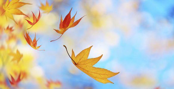 树叶为什么落下来?