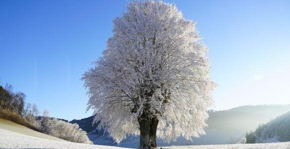 不同的树过冬方法相同吗?