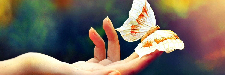 为什么蝴蝶可以做到没有声音得飞舞?