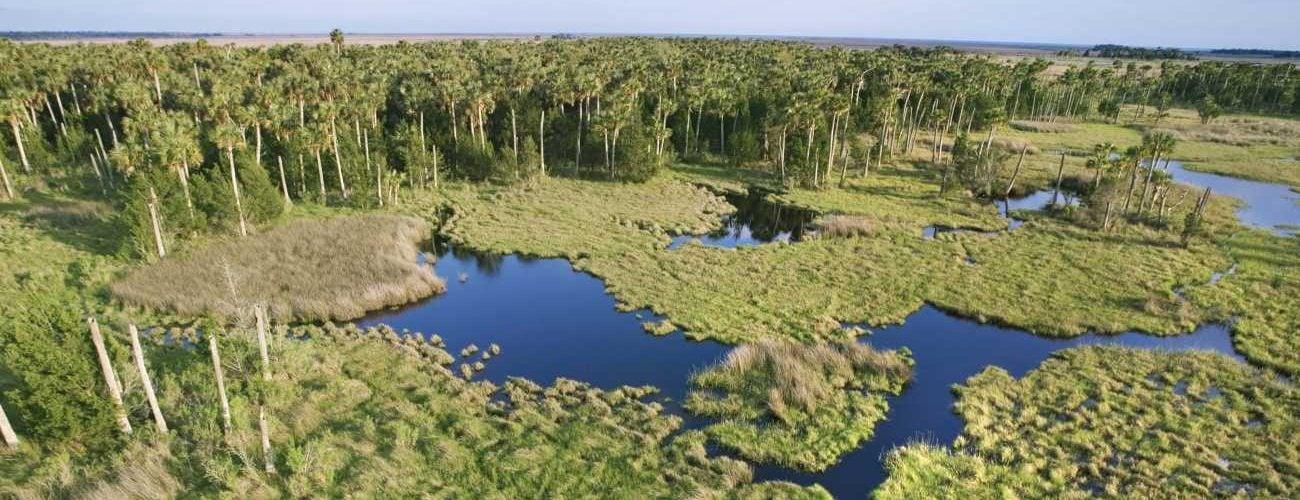 """号称""""绿色陷阱""""的沼泽是怎样形成的?"""