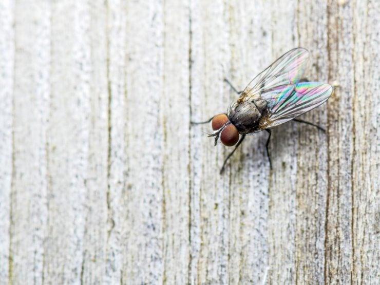 为什么苍蝇停在天花板上不会掉下来?
