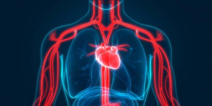 为什么血能在人体中流动?
