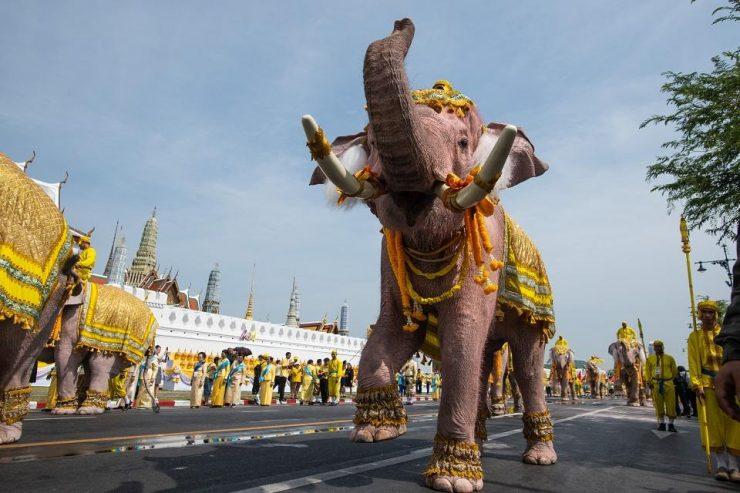 """为什么泰国被称为""""大象之邦""""?"""