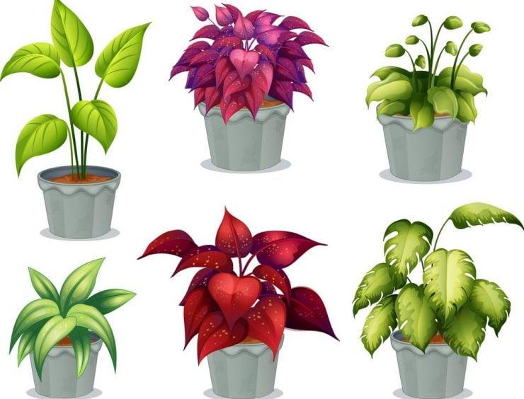 为什么有的植物开花,有的植物不开花?