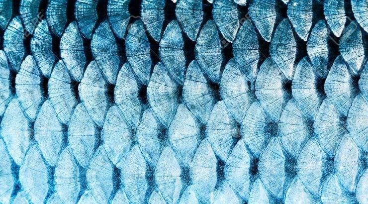 为什么看鱼鳞能知道鱼的年龄?