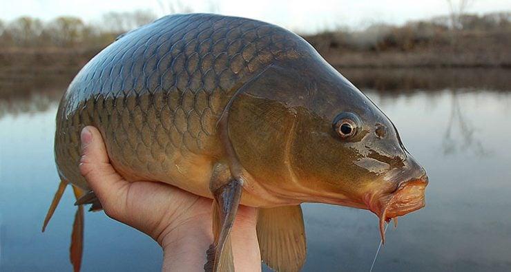 为什么鱼的身上会有黏液?