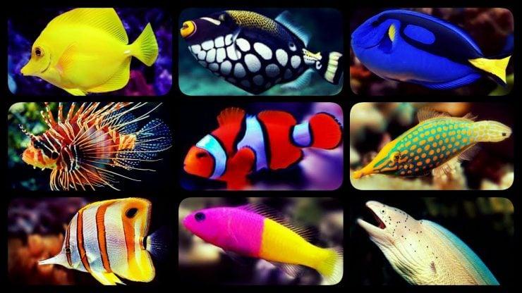 为什么鱼有淡水鱼、海水鱼之分?