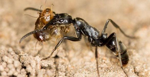 为什么说蚂蚁可以用来治病?
