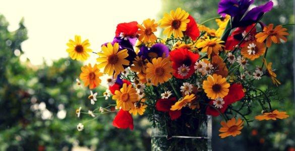 为什么花有各种不同的颜色?