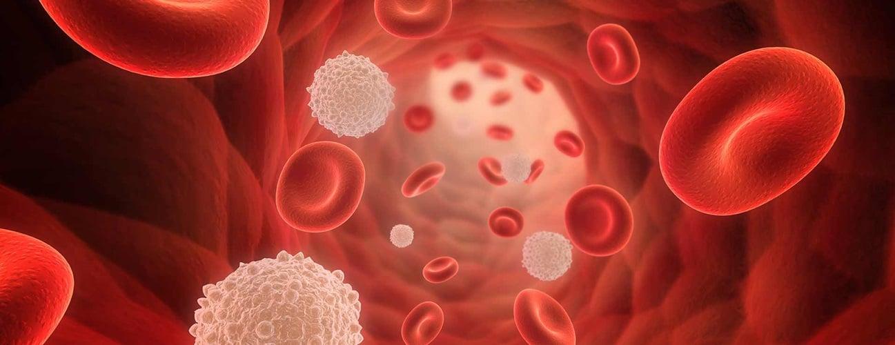 为什么红细胞有免疫功能?