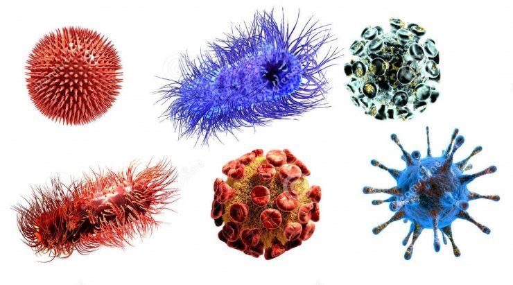 为什么病毒可致人于死地?