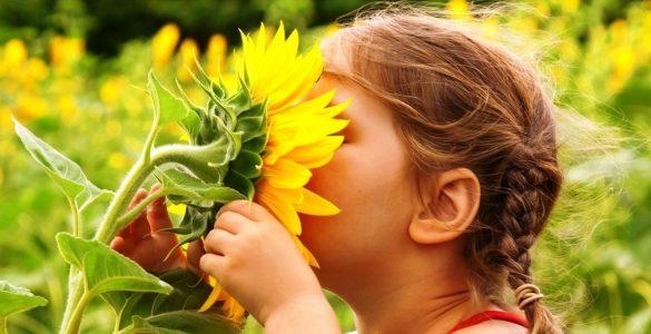 为什么艳丽的花通常没有香气,而香花都是素色的?