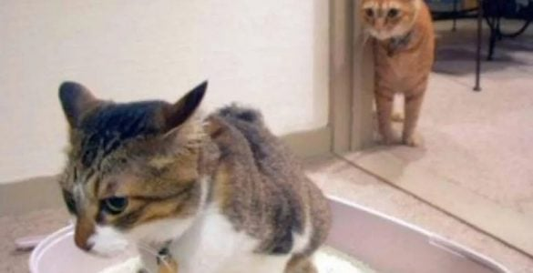 猫为什会埋大便?